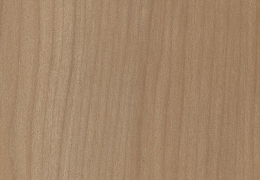 Borneo Kauri (Agathis borneensis ) - Agathis
